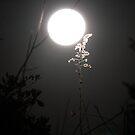 moon at night by katpartridge