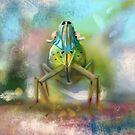 Palm Planthopper  by © Karin Taylor