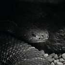 Shadow Rattler by Scott Engel