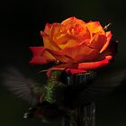 HUMMINGBIRD ROSE~ by RoseMarie747