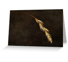 Janet Lee Photography 2011 Greeting Card