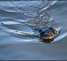 Otter by mimsjodi