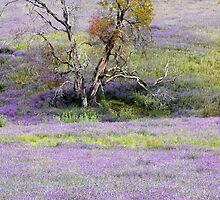 Tumbarumba Purple by Harry Oldmeadow