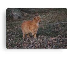 Mouse season Canvas Print