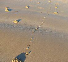 Morning Walk by Carolyn Boyden