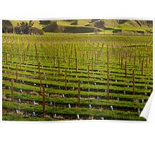 Marlborough Vineyard 2 Poster