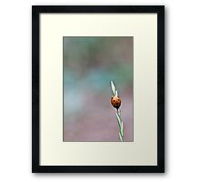Lonely at the top... Framed Print