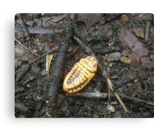 Scale Insect - Murramarang National Park Canvas Print