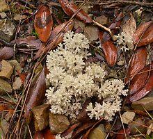 Lichen on Dove Lake Circuit Track - Tasmania by SamPoulson