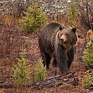 Grizzly Falls by JamesA1