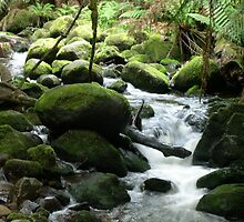 Creek on St Columba Falls Track - Tasmania by SamPoulson