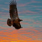 eagle flight by Rodney55