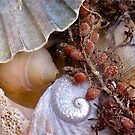 Shell delights by Ali Brown