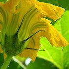 Vegetable Series image 3 by Melissa Thorburn