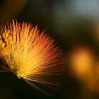 Silk Flower by Melissa Thorburn