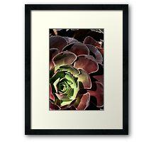 Going Cactus  Framed Print
