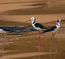 Birds at Turrimetta beach by Doug Cliff