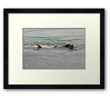 Playing seals Framed Print