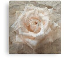 Old Rose Canvas Print