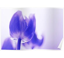 Altered tulip 3 Poster