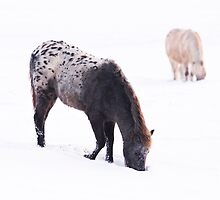 Horses in the Snow by Skye Hohmann