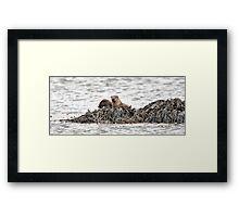 Otters, Mull, Scotland Framed Print