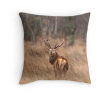Red Deer Stag, Mull, Scotland Throw Pillow