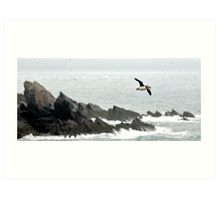 Puffin Over Heavy Seas, Wales Art Print