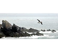 Puffin Over Heavy Seas, Wales Photographic Print