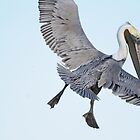 Pelican Flight: Not a Graceful Moment by Joe Jennelle