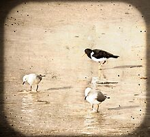 Birds at the Beach by pennyswork