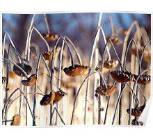 Somber Sunflowers Poster