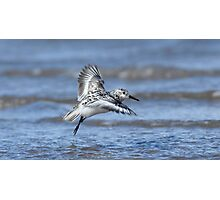 One Legged Sanderling Photographic Print