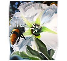 """Bee-ing There"" - large Mexican bee on a white blossom Poster"