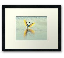 Little Egret, Evening Light Framed Print