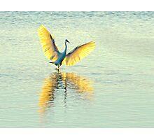 Little Egret, Evening Light Photographic Print