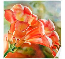 """Spanish Trumpets"" - vibrant orange trumpet shaped flowers Poster"
