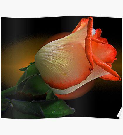 Orange Rosebud Poster