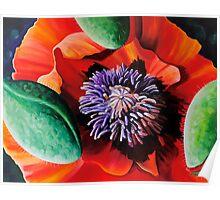 """""""Velvet Poppy"""" - huge vibrant poppy painting Poster"""