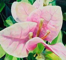 """""""Blushing Bugambilia"""" - pink bougainvillea blossoms by James  Knowles"""