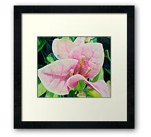 """Blushing Bugambilia"" - pink bougainvillea blossoms Framed Print"