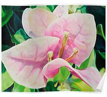 """Blushing Bugambilia"" - pink bougainvillea blossoms Poster"