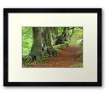 Beech Avenue, South Wales Valleys Framed Print