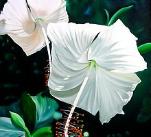 """Hibiscus Blancas"" - white hibiscus blossoms by James  Knowles"