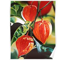 """""""Chinese Lanterns"""" - cape gooseberry Poster"""
