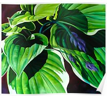"""Has Visto La Hosta"" - green hosta leaves Poster"
