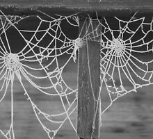 Frosty morning cobweb by OPUS1