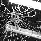 Frozen cobweb by OPUS1