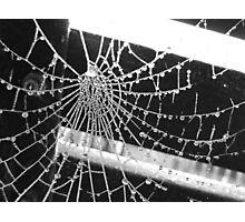 Frozen cobweb Photographic Print