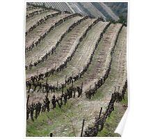 Vineyard lines Poster